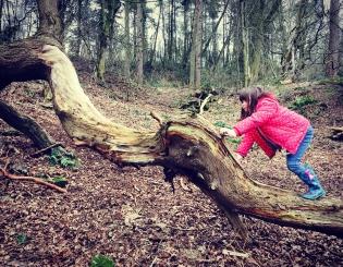 Adventuring in Hookstone Woods, Harrogate
