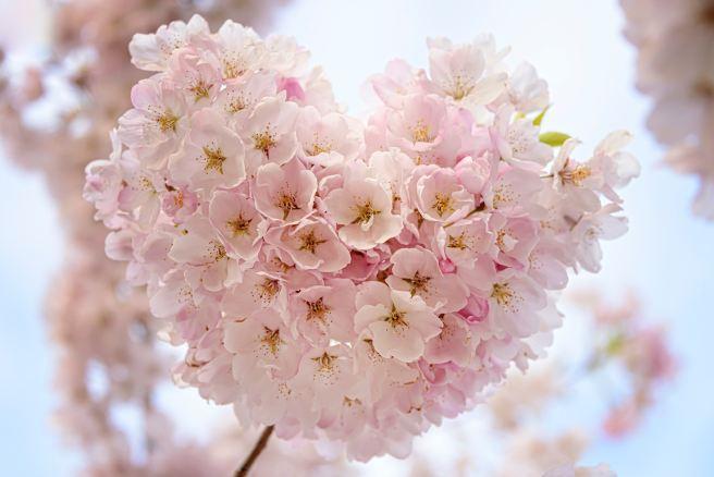 pink heart flower.jpg